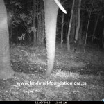 Elephant spotted in Knysna Forest