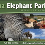 Knysna Elephant Parks Response to Abuse Allegations
