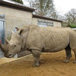 What are YOU doing for World Rhino Day? How about a challenge?