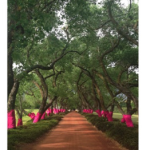 Anthonij Rupert Wyne supports Pink Trees for Pauline