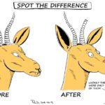 Cartoon - Springboks: Before and After (Ireland)