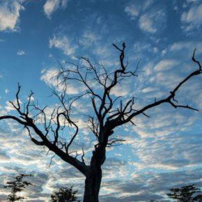 Visit the Kalahari this winter
