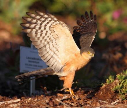 mailchimp bird