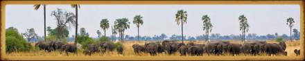 Upload+Image+2-bostwanasafari