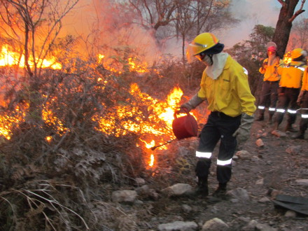 Working on Fire (WoF) firefighters remain on high alert throughout the fire season (December – May) to minimise big fires like this one – urges communities to be fire savvy