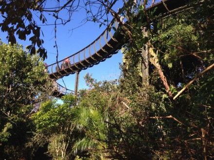 One of South Africa's great new tourist attractions: the 'Kirstenbosch Centenary Tree Canopy Walkway' - or, as we like to call it, The Boomslang