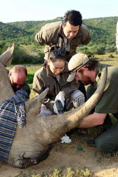Vietnamese popstars Thanh Bui and Thu Minh in South Africa taking part in a rhino darting experience in April 2014.