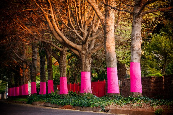 Trees wrapped by Pink Trees for Pauline Middelburg, Mpumalanga. Photographer Mariette du Buson