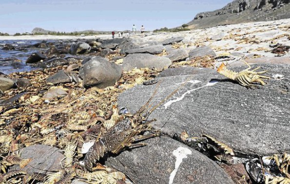 Beach-goers are advised not to eat shellfish or dead fish washed onto the shore. File photo Image by: ADRIAN DE KOCK