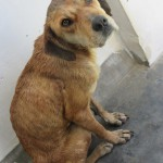Before: Starving, dirty and terrified. We could not touch her. Look at those pleading eyes.
