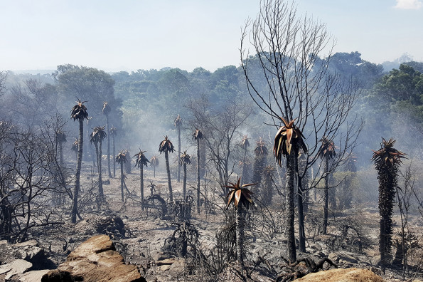 Ongeveer 500 Hektaar plantegroei is verwoes sedert Saterdag in die Heimersrivier-area