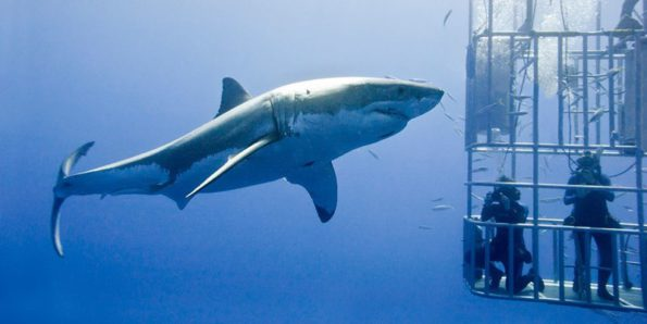Operators are concerned that boat-based whale watching and White shark cage diving activities could cease when the current permits expire