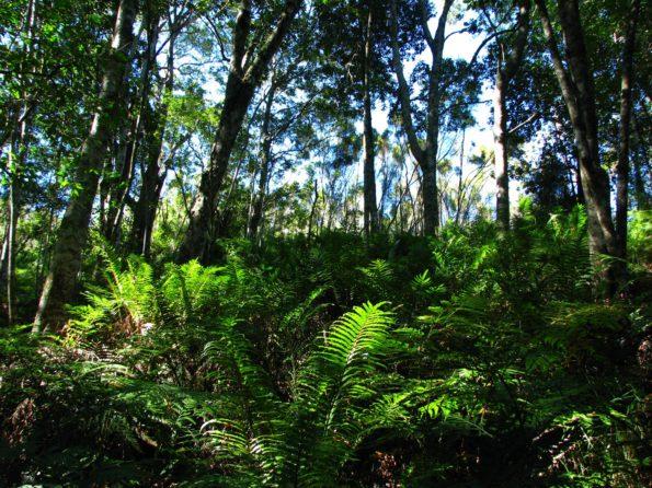 Forest scenic_GV_jbaard_1304-1