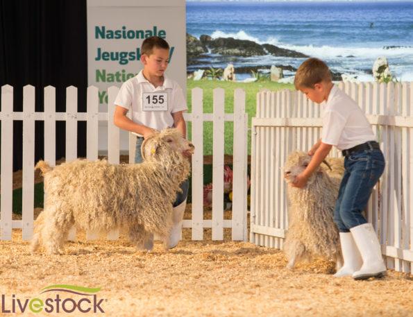 Livestock-299