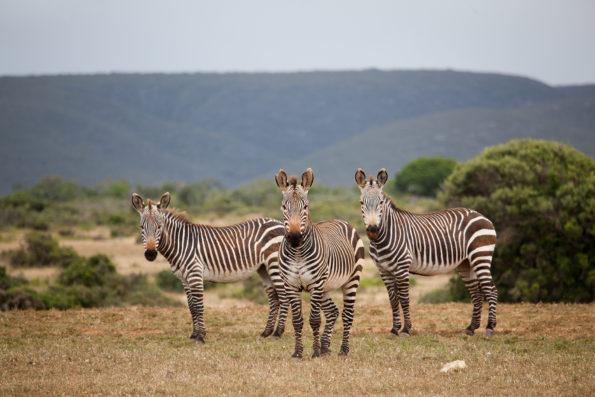 De Hoop Nature Reserve (Pic by Scott Ramsay)